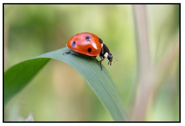 ladybird by Stig Nygaard