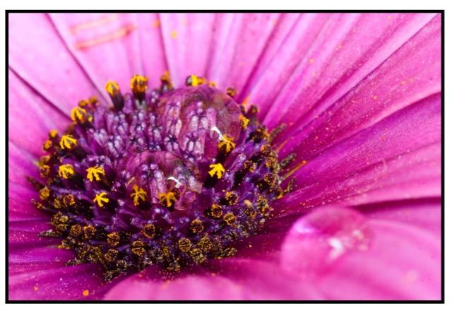 flower Lluis Satorre Gonzalez canon lens